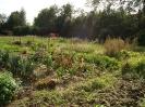 Der Mitmachgarten Ende September 2017